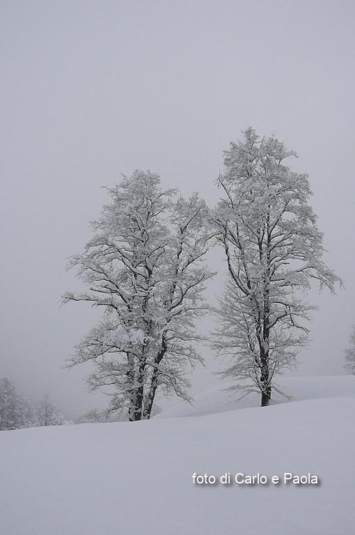 coppie bianche